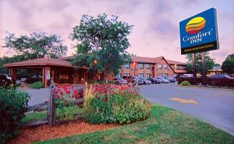 Comfort Inn - 85 Queensway East, Simcoe, ON, - 519-426-2611 - Click here to visit our website!